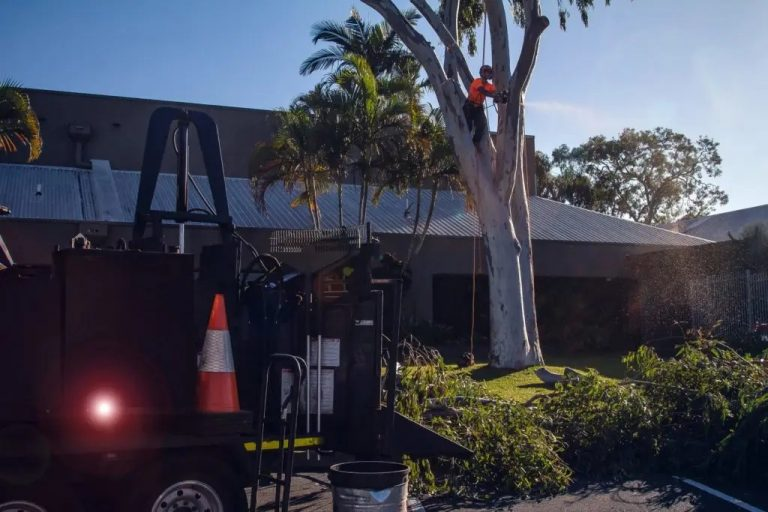 Aussie Tree Removal Darwin